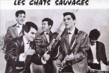 chatssauvages2