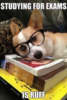 """Dog wearing glasses, head resting on books, """"Studying for finals is ruff"""""""