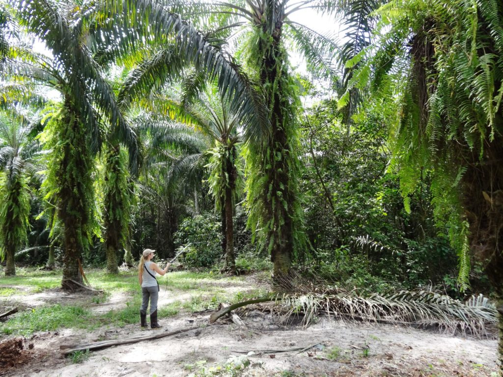 Professor Knowlton tracking birds using radio-telemetry in an oil palm plantation in Brazil.